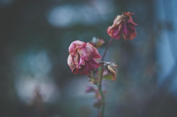 Death - flowers